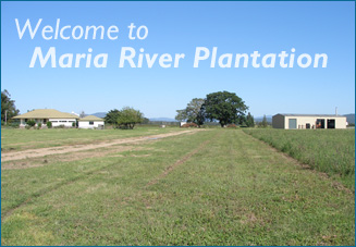 Welcome to Maria River Plantation